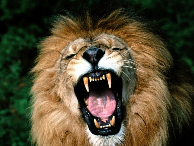 Image result for roaring lion